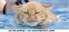 фото из интернета!  Я же кот, а не Муму, плавать долго не могу! .  Хоть водичка голубая, Я от страха...